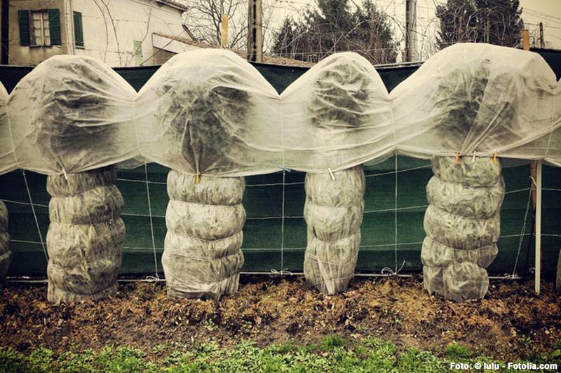 Pflanzen Winterfest Machen : pflanzen winterfest machen pflanzen f r nassen boden ~ A.2002-acura-tl-radio.info Haus und Dekorationen