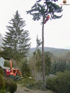 Professionelle Baumfällung zur Gefahrenbeseitigung