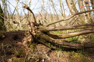 Sturmschaden Baum entwurzelt