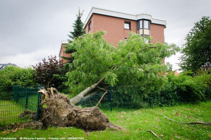 Baum Haus Sturmschaden Haftung