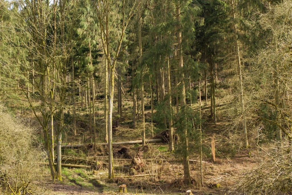Sturmschaden - Umgeworfene Bäume