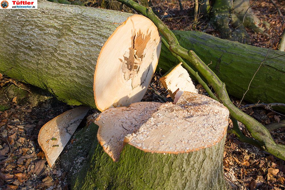 Kettensaege-Baum-faellen-Fallkeil