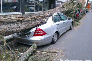 Umgefallenen Baum, was zahlt welche Versicherung?