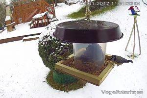 Vogelfutterhaus-schnell-gebaut-Fertig-Vogel-Winter