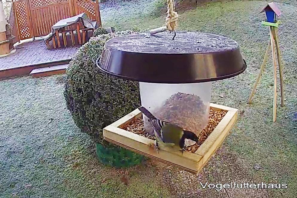 vogelfutterh uschen mit futterspender schnell selbst gebauttueftler und. Black Bedroom Furniture Sets. Home Design Ideas