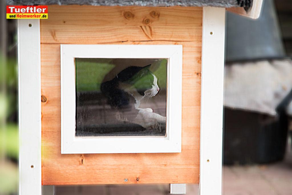 Katzenhaus-DIY-Projekt-Fertig-Katze-duch-Fenster