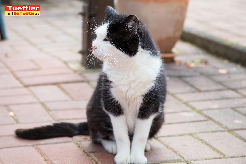 DIY - Outdoor Katzenhaus für kalte Jahreszeiten selber ...
