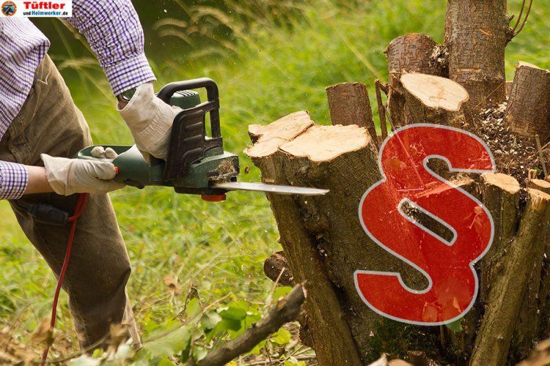 Kettensaege-Baum-faellen-Gesetze.jpg